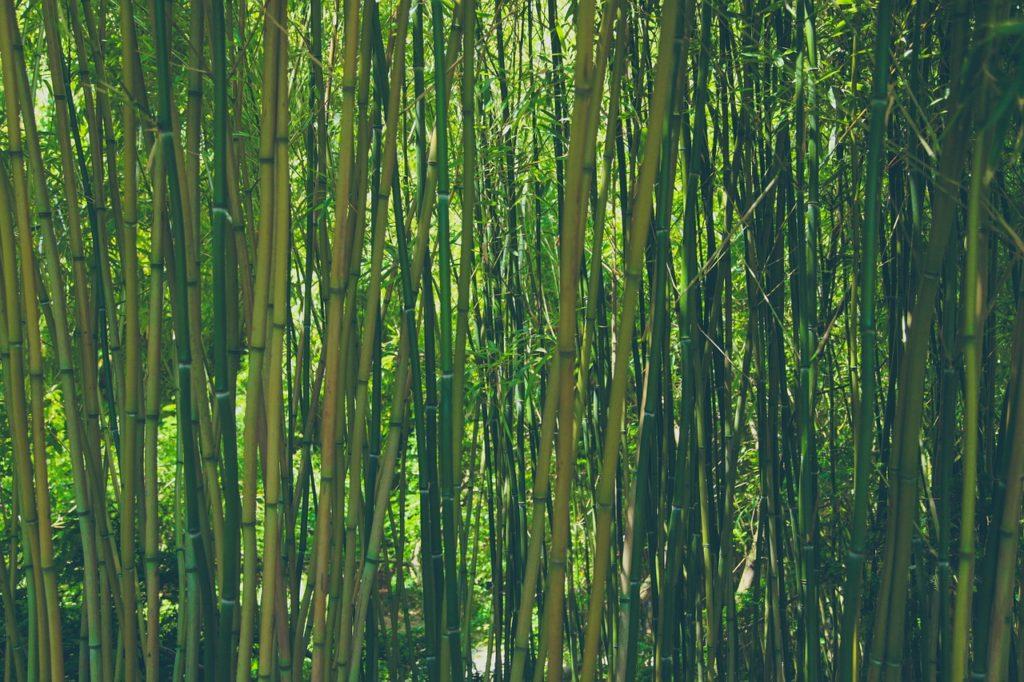 Kwaliteit bamboe rietjes